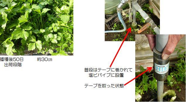 mitsuba_3.JPG