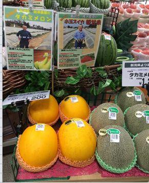 takizawa_melon.JPG